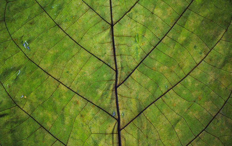 Close up view of leaf. Photo by Markus Spiske on Unsplash